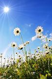flower in summer under blue sky