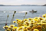 Boat with flowers in the foreground