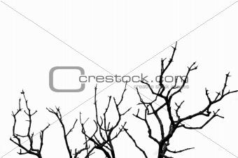 deciduous tree silhouette