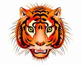 tiger head - vector