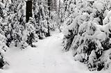snowy forest pathway Byelorussian landscape view Belarus olimpic