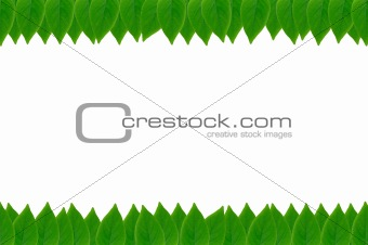 green leaves frame with white background with copy space
