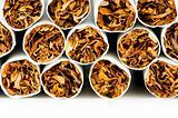 Smoking cigarettes isolated on the white background