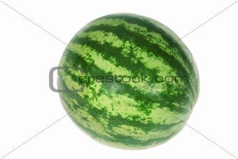 One Watermelon