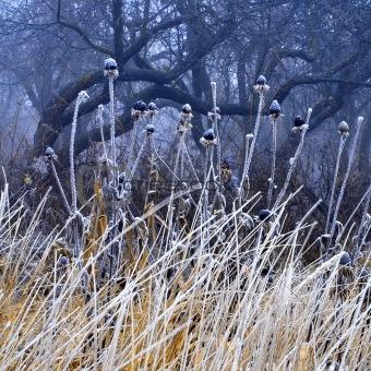 Foggy deserted garden