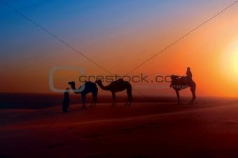Camels on Sand