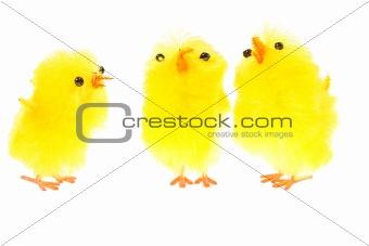 yellow chicklings