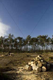 Forest and chopped wood