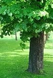 tree with green foliage