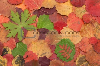 Autumn sheet on white background