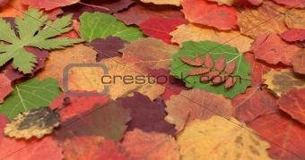 Autumn sheet background