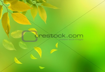 Bright green leaves on the branches in the autumn forest