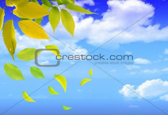 Bright green leaves on a bright sky