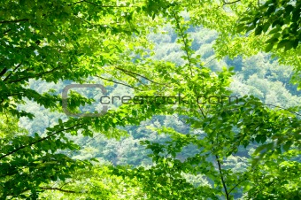 Nature concept - Green forest during bright summer day