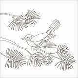 Titmouse on a pine branch, contours