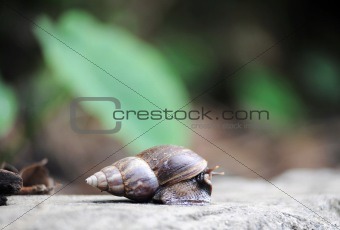 Snail on rock