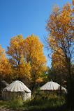 Tents in the autumn woods