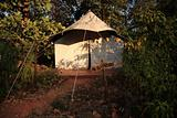 Jungle tent Goa India