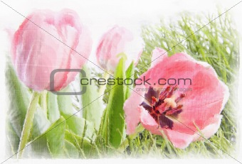 Watercolor of pink tulips with distressed effects