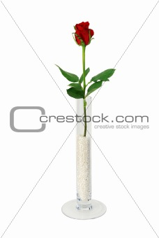 Single rose in simple glass vase filled with beads