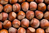 hazelnuts background