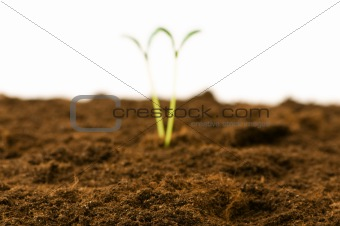 Green seedling - focus in the front