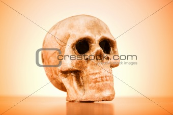 Skull of human against the gradient background