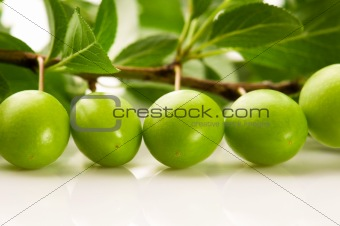 growing green plums isolated on the white