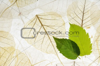 green and dry leaves