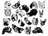Set of dogs head. Vector Illustration