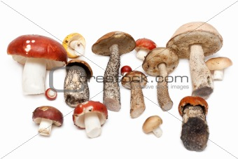Different mushrooms