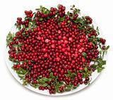 Cowberry on plate