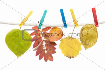 Autumn sheet on clothes-peg