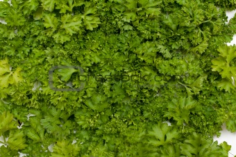 Background parsley