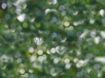 Abstract Natural Forest Color Background.  Natural Bokeh