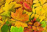 Multi colored fallen autumn leaves