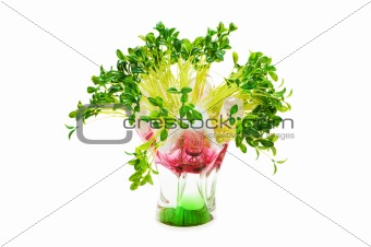 Green leaves in vase isolated on white