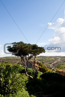 Beautiful landscape in Gozo Island, Malta