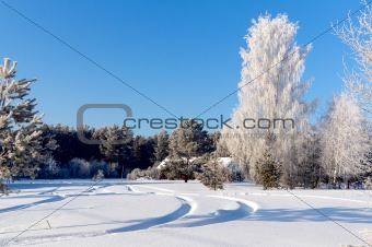Forest in winter, beautiful