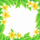Frame with green leaves and frangipani