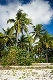 Palm trees on Zanzibar island