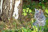Gray cat portrait outdoor