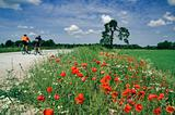 Training of bicyclists on beautiful road with a blossoming poppy