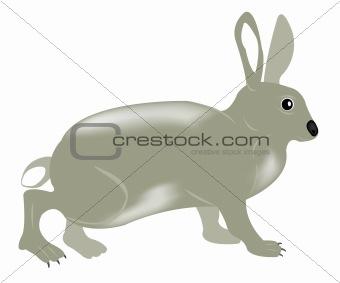 Gray rabbit on white background