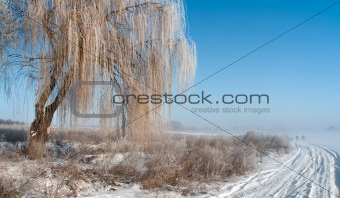 Foggy frosty morning 2