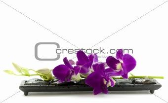 Beautiful purple orchid