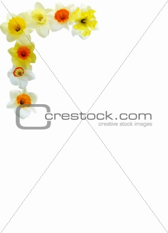 Daffodil Corner Arrangement