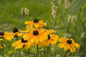 Beautiful yellow flowers.