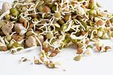 Sprouts isolated on white.