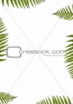 Green Fern Abstract